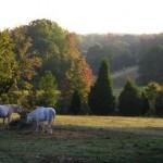 grazing2
